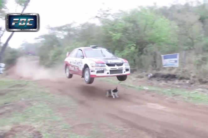 VIDEO: Rally Car Hits Jump, Avoids Killing World's Luckiest Dog
