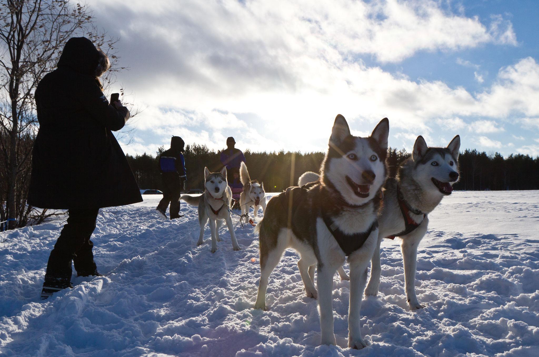 2016 bentley power on ice husky dogs