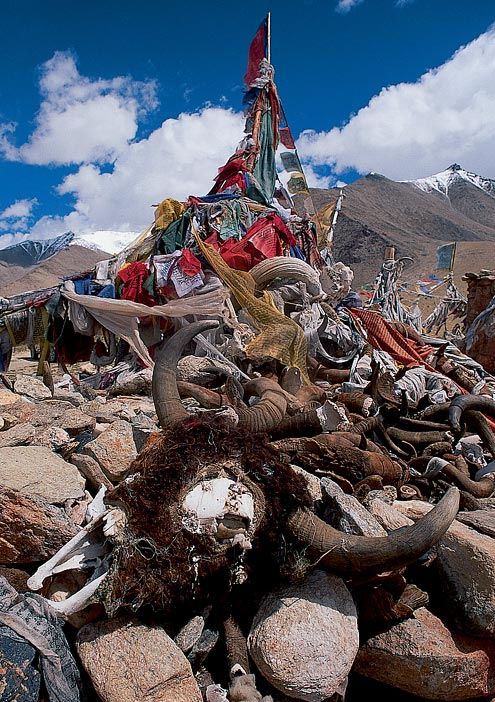 Tibetan Buddhists' prayer flags are common throughout the Himalayas and are said to bring happiness and protection to those who pass by. This one is adorned with bones, horns, and the skulls of Yaks.