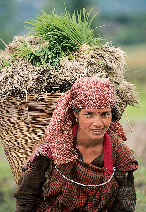 A local village woman carrying a basket of rice near Manali. Sometimes these women carry baskets for miles from the fields to the city.