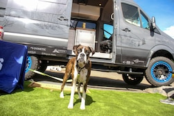 The Dogs of Overland Expo West